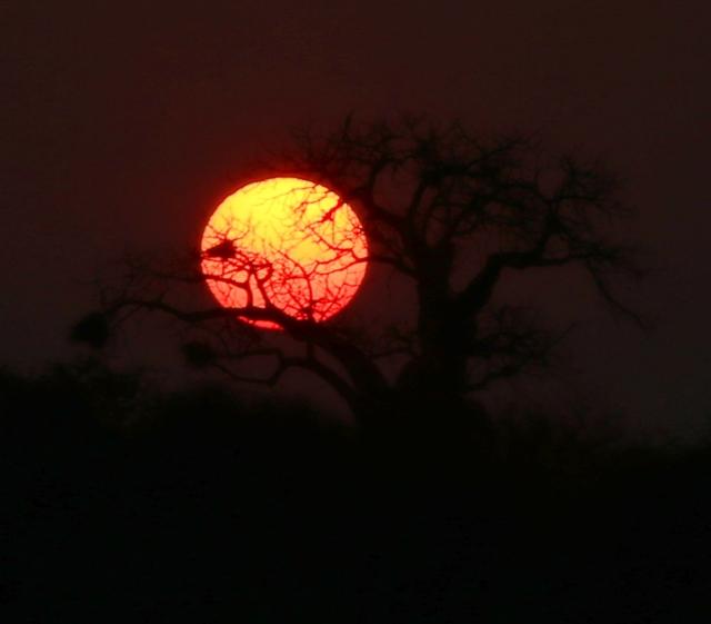 sun baobab