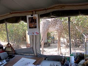 giraffe_outside